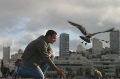 Feeding Pidgeons on Pier 39