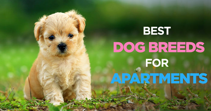 Das Beste Best Dogs For Apartments Finding The Perfect Apartment In Diesem Monat