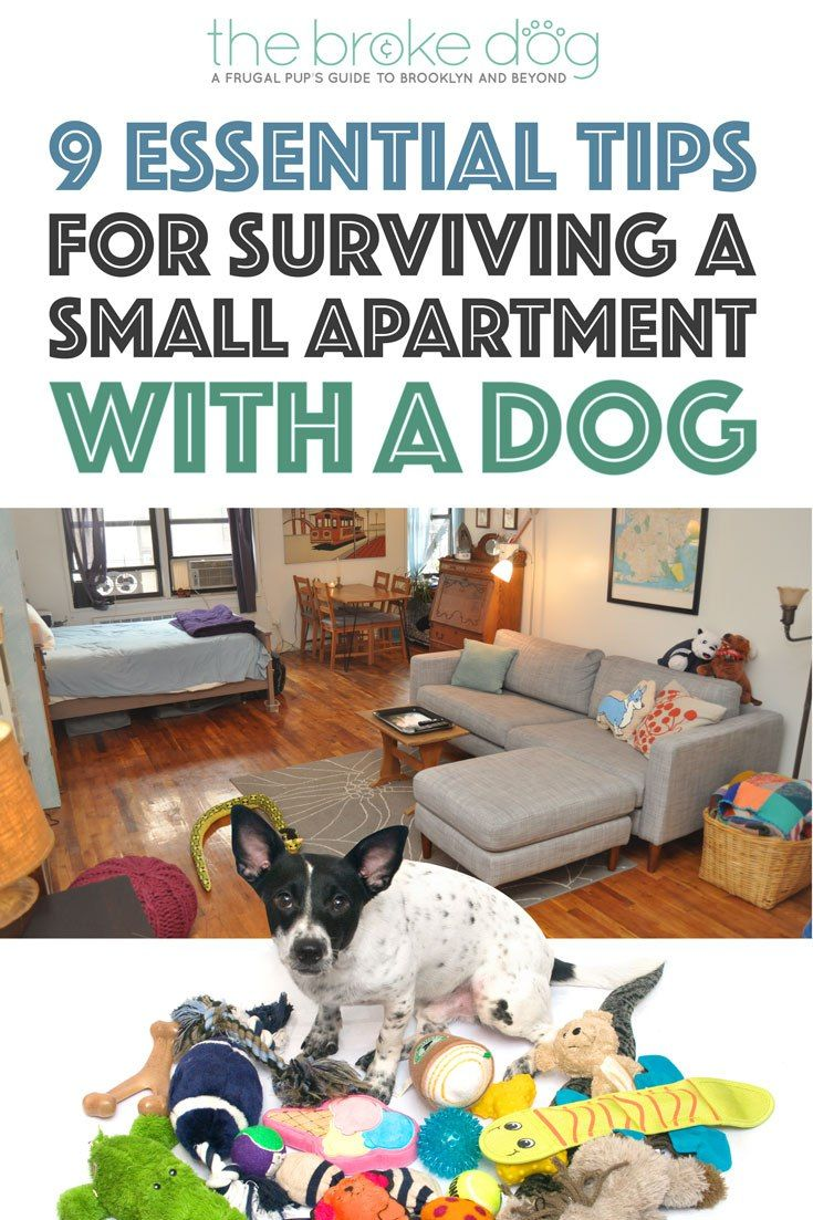Das Beste 9 Essential Tips For Surviving A Small Apartment With A In Diesem Monat