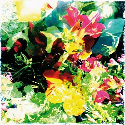 flowersummer