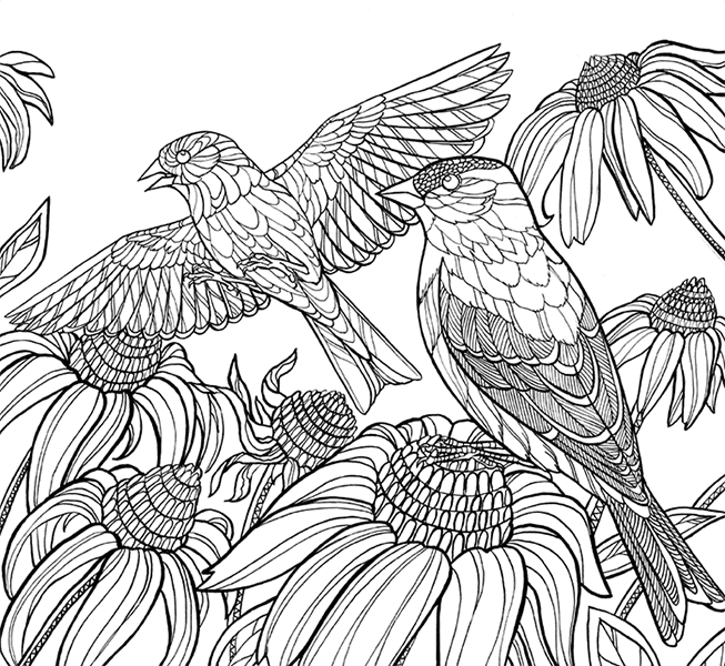 America's Favorite Birds: 40 Birds To Color – Cornell Lab Publishing Group