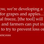 frozen apples