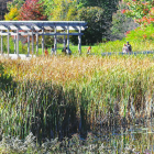 The Board of Trustees will vote on approving the renaming of the Cornell Plantations on Friday.