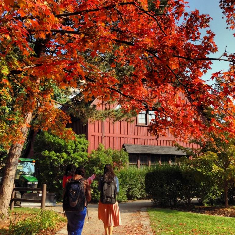 Photo Courtesy of blogs.cornell.edu