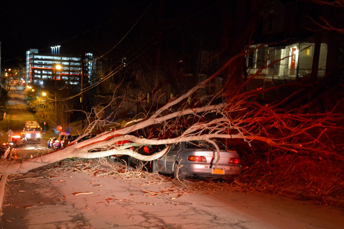 Gusty winds blew a tree onto a car on South Cayuga Street on Thursday morning, waking up college students and downing electrical lines.