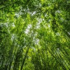 bamboo-1224035__340.jpg
