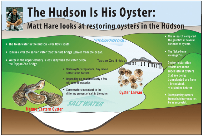 This graphic describes how the Hare Lab measures wild spat-on-shell oysters.