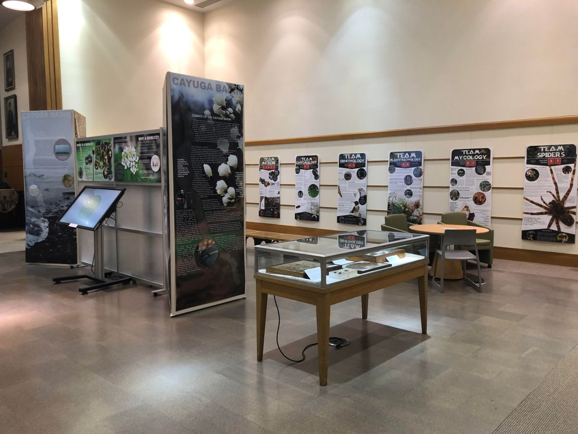 A new exhibit in Mann Library showcases the work of fifteen teams that spent 24 hours cataloguing species ranging from spiders to fungi.