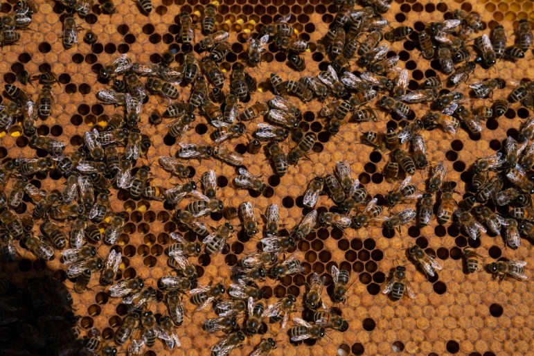 Bees hibernate over the winter, so the colonies still have relatively low populations.