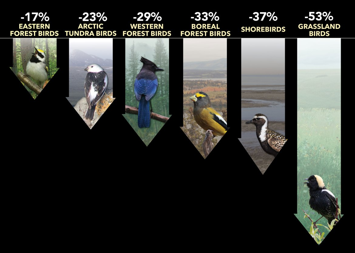 Ornithologists, Birdwatchers Uncover Staggering Magnitude of Bird Population Decline