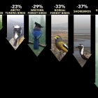 Bird species across North America are declining at a far more drastic rate than previously expected.