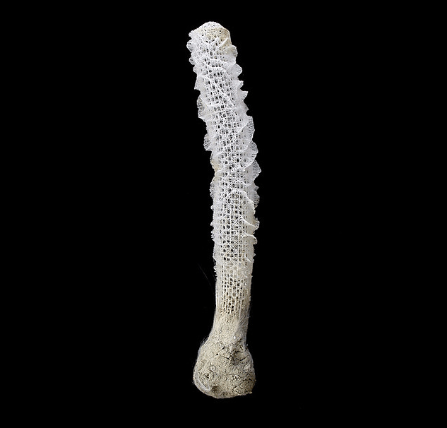 Photograph of Euplectella aspergillum specimen by Swee-Cheng. Source: (http://bit.ly/1qmCoAi)