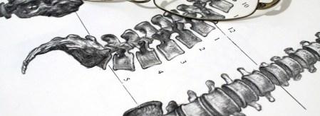 Nicolas Cornevin - Osteopathe Coubert 77170 - Mal de Dos