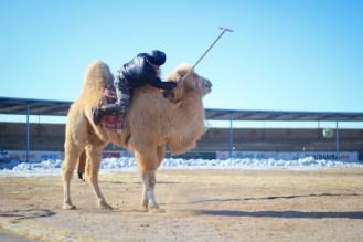 20120213_camel_fest_LR-52