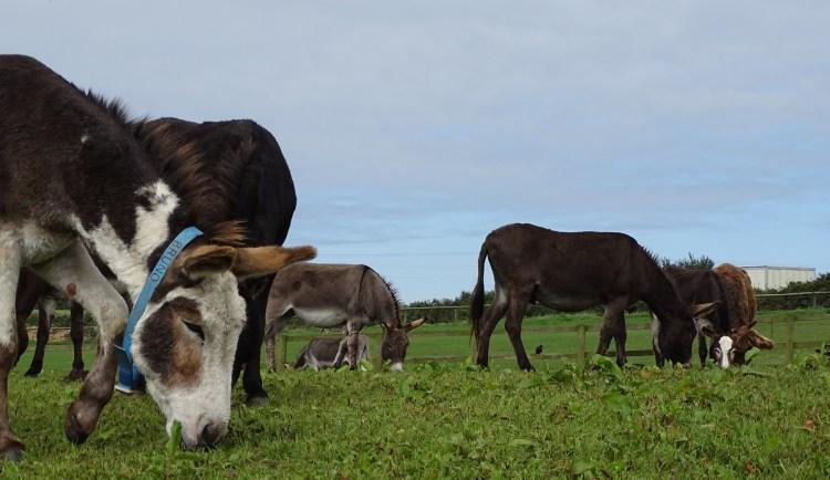 Flicka foundation donkey sanctuary