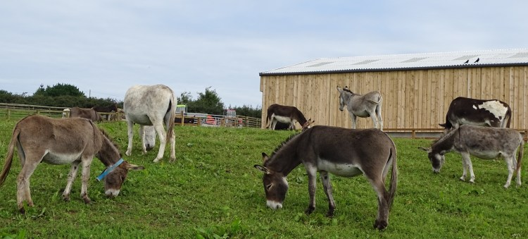 Flicka foundation donkey sanctuary