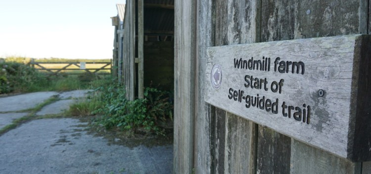 Windmill Farm Reserve Lizard