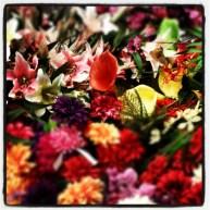 Instagram_cornutus_20121114 (7)