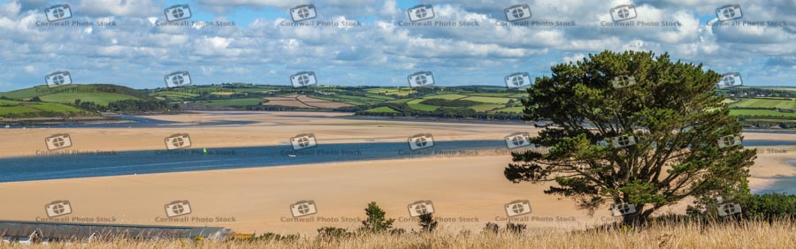 Views Down The Camel Estuary with a large Montery Pine in the foreground
