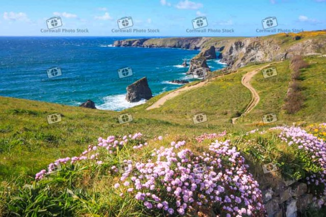 Bedruthen Steps in the sunshine with sea thrift in the foreground in Cornwall