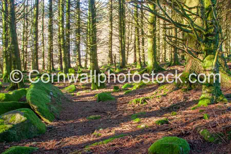 Mossy Boulders In Forest