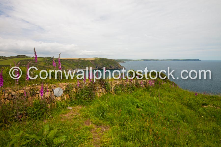 Distant Dodman Point With Stone Wall And Foxgloves