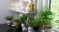 4 Healthy Herbs to Grow Indoors This Winter