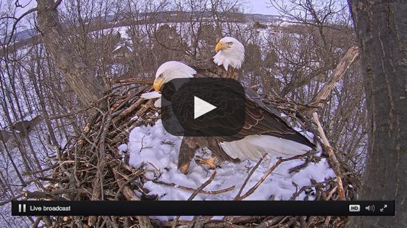 Eagles Nest Stream