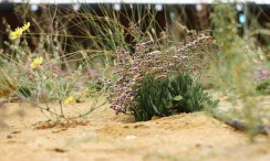 Sahara-Forest-Project-Plants-1020x610