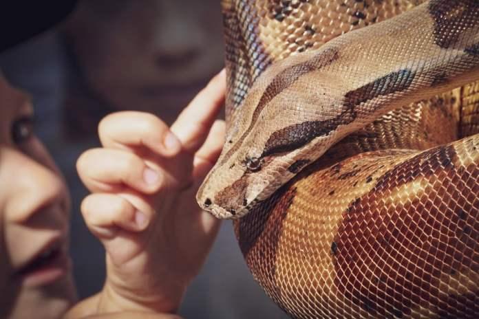 Personne caressant un serpent