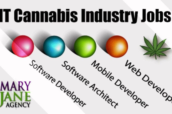 Cannabis IT Staffing & Recruiting – MaryJaneAgency.us