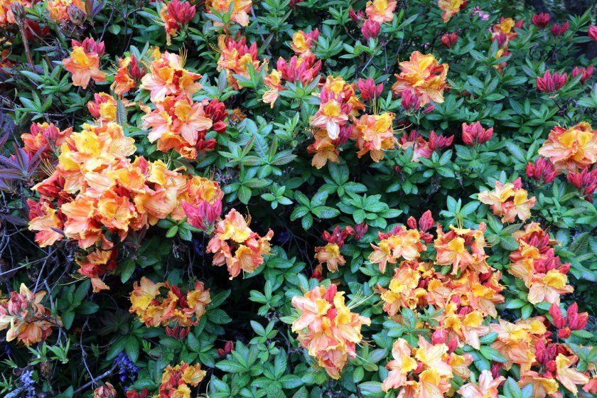 2017_10_15 Botanical Gardens 06