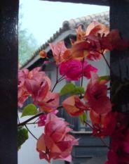 Flores en el Corral del Conde