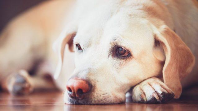 Como o lockdown afeta a vida dos animais | Correio dos Campos - Notícias  dos Campos Gerais