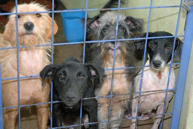 Canil completa quatro anos e cães abandonados continuam incomodando moradores de Vazante