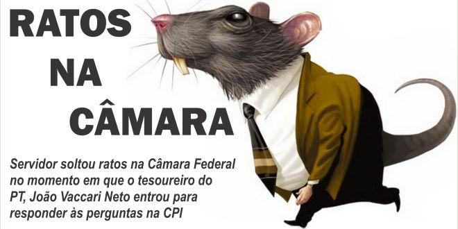 Ratos na Câmara! servidor protesta na CPI da Petrobras soltando roedores