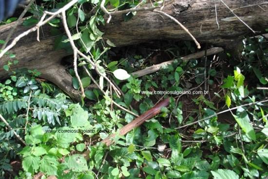 Pedaço de madeira sujo de sangue - abandonado no mato - arma do crime