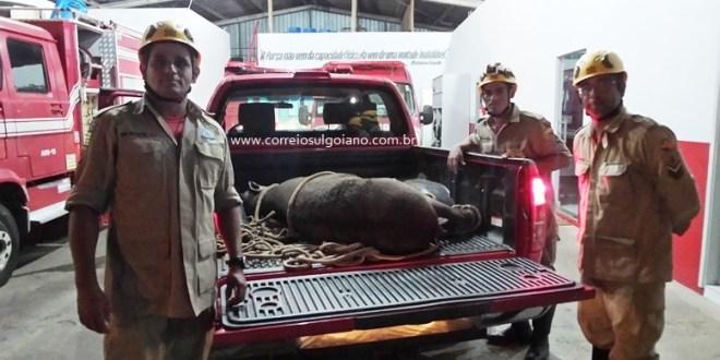 Zelando pela fauna e a flora: Corpo de Bombeiros resgata animal e transfere para IBAMA em Goiânia