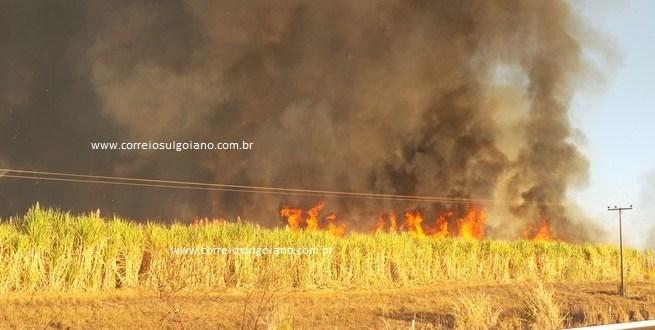 CRIMINOSO! Homem põe fogo em canavial e foge… dizem motoristas que passavam de carro pela rodovia!!!