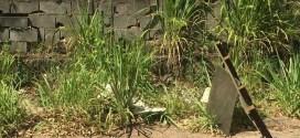 Cabeça humana encontrada em decomposição em Aparecida. Segundo caso em 10 dias na grande Goiânia