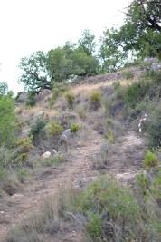 trail recorrido-3