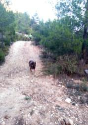 correores entrene sprint-trail 18