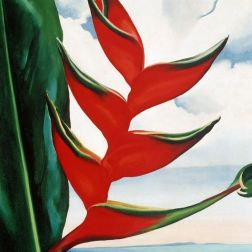 Georgia O'Keeffe Heliconia, Crab's Claw Ginger, 1939 Oil on canvas, 19 x 16 in. Collection of Sharon Twigg-Smith