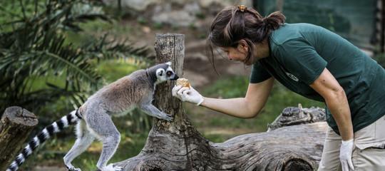 zoo biodiversita animali
