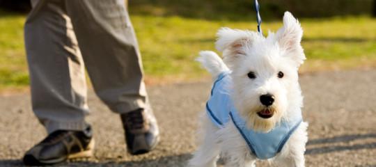 accademia crusca scendere cane