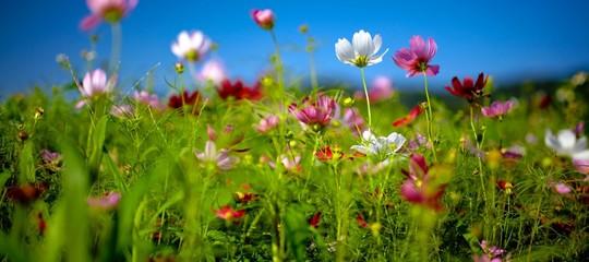 Il legame inossidabile tra gli Italiani e i fiori