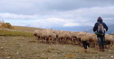 Il pastore e allevatore abruzzese: Solidarietà ai colleghi della Sardegna