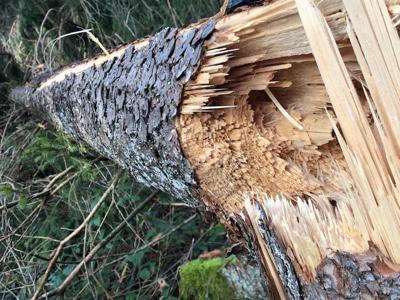 Clima, in Italia 42.500 ettari di bosco distrutti