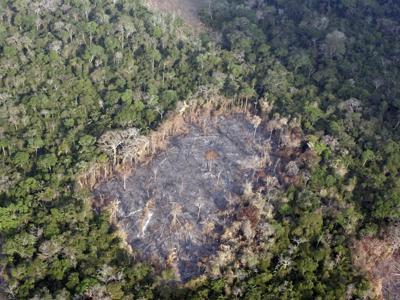 Imprese e deforestazione, c'è ancora da lavorare