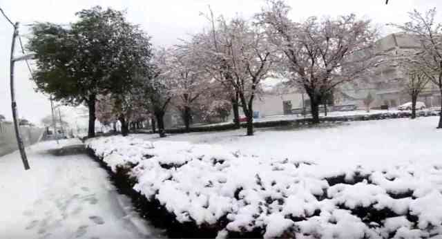 immagine 1 articolo incredibile tokyo da 25 gradi alla neve in sole 24 ore